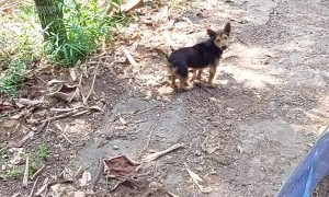 Doggy Stands up After Pretending to Be Injured