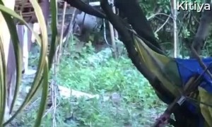 Huge Snakes Wrap Around Each Other