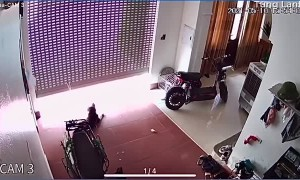 Scary Moment for Doggy Tied to Roller Door