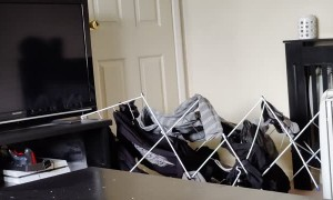 Cat Climbing on Air Clothes Dryer Takes a Tumble