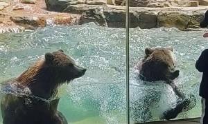 Dancing Bears Make Waves at the Zoo