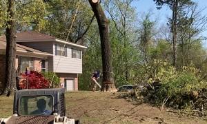 Big Tree Felling Fail in Birmingham