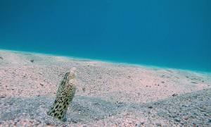 Eels Dance in Sand