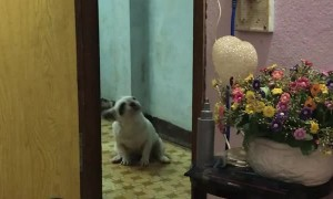Dog Dances for DJ