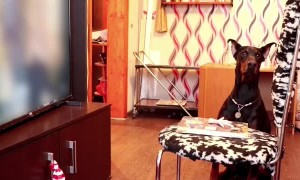 Clever Dog Fails the Patience Test Successfully