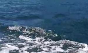 Leaping Orca Surprises Boat Passengers