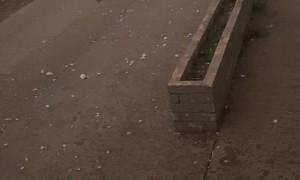 Cat Sprints Through Hail Storm Seeking Shelter