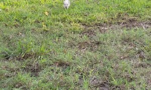 Beatrice The Rescue Piglet and Her Excited Oinks