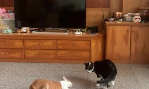 Roly Poly Battle Cats