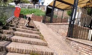 Dog Skates Down Stairs