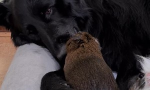Unlikely Friends Keeping Each Other Clean
