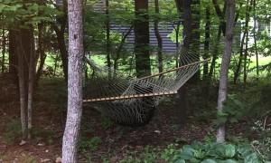 Bear Has a Relaxing Swing in Backyard Hammock