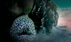 Face To Face With A Japanese Dragon Eel