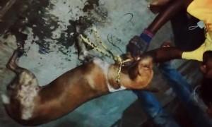 Good Samaritans Save Dog From Sewer Drain