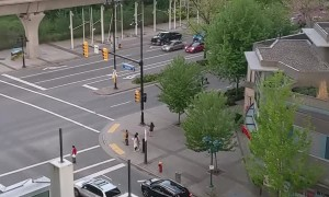 Canadians Patiently Wait for Crossing Ducklings