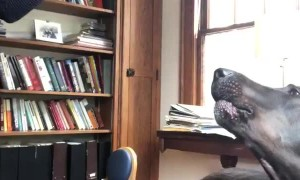 Dog Accompanies Violinist in Musical Creation