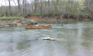 Hero Dog Rescues Two Pups Trapped In Moving Kayak