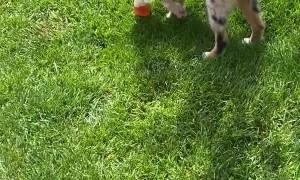 Puppy Runs Away With Tasty Iced Tea