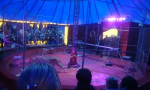 Lioness Turns on Trainer During Russian Circus Performance