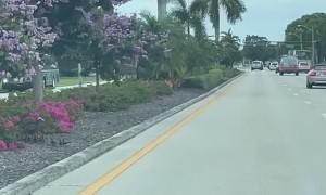 Florida Ducklings Helped Across Street