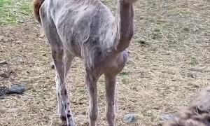 Llamas and Alpacas Show Off Their Summer Style