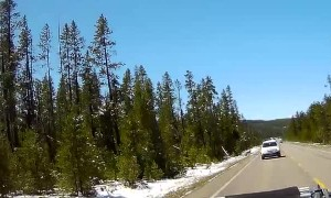 Wolf Chases Elk Into Side of Car