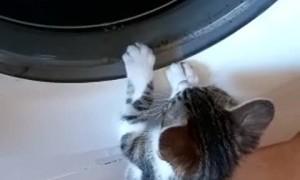 Curious Kitten Discovers Washing Machine