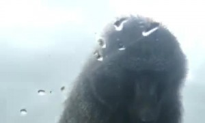 Climbing Monkey on the Car Gives Boy a Big Surprise