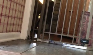 Puppy Dog Opens Pet Gate With Ease