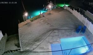 Crocodile Climbs into Pool