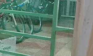 Cat Climbs Through Gate With Her Kittens