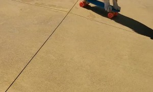 Dog Skates on Mini Skateboard