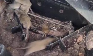 Swarm of Mice Scurry Away