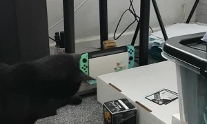 Printer Causes Curious Kitty to Twitch