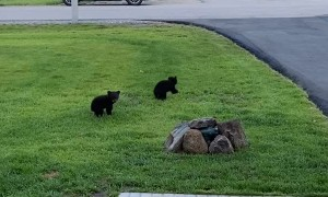 Early Morning Visit From Family of Bears