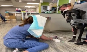 Vet Tech Combats Doggy Drool with Puppy Pad