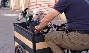 Cargo Bike Carries Cute Dogs