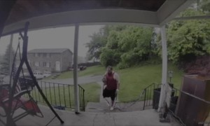 Deer and Doggy Have Early Morning Encounter