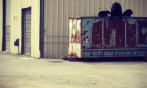 Black Bear Family Foraging in Tall Dumpster