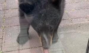 Young Bear Meets Bella the Cat