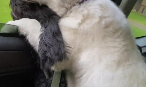 Dogs Share Car Window on Car Ride