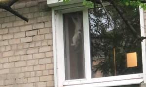 Cheeky Bird Taunts Kitty Through Window Screen