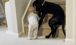 Protective Pup Keeps Kid From Climbing