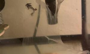 Frog's Skin Waves in Water