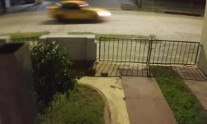 Cunning Cat Evades Dog Pack