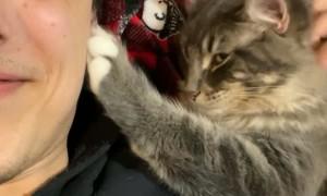 Owner Pets Cat, Cat Pets Owner
