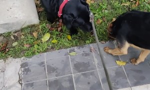 Street Dog Runs to Say Hello