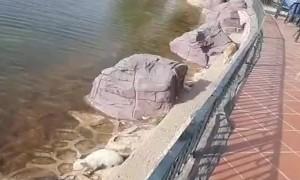 Helping Cat's Catch Fish