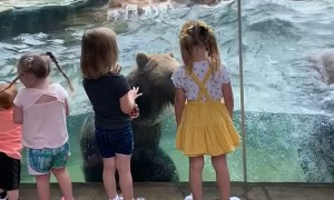Kids Enjoy Amazing View of Bears Playing in the Pool