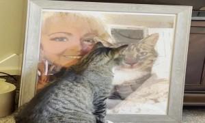 Grieving Cat Misses Her Dad